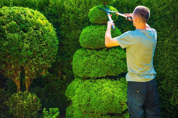 Why You Should Hire a Tree Service