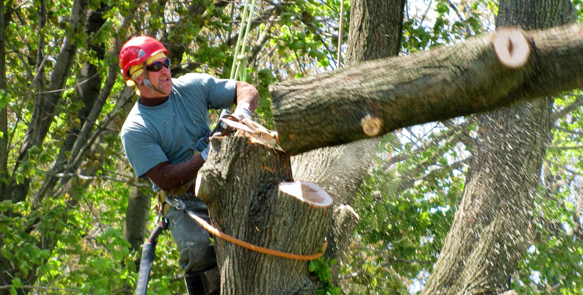 most affordable tree service near me