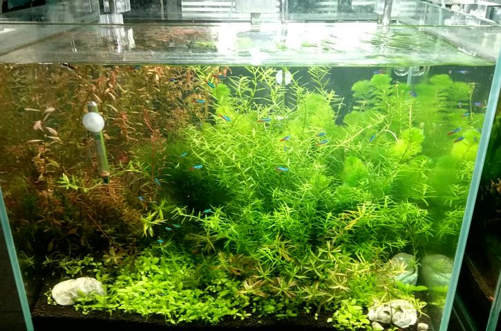 Beginners Guide to Aquarium Plants