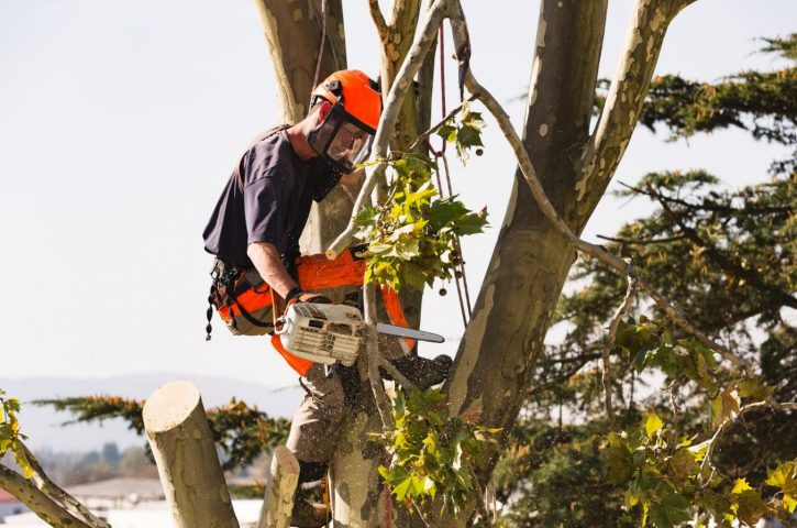 Avoid These Mistakes When Hiring a Tree Removal Service