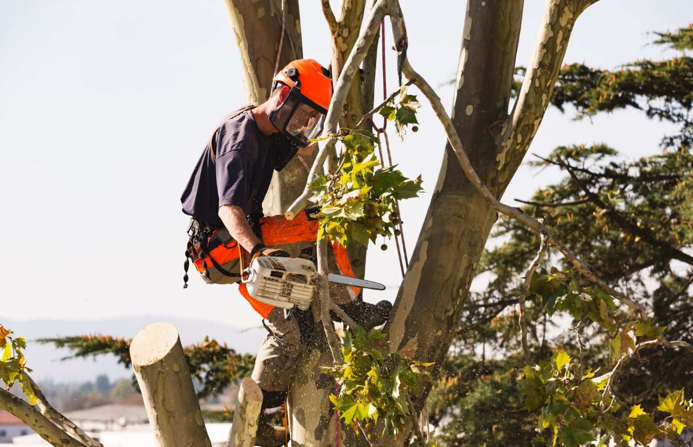 monster tree service austin