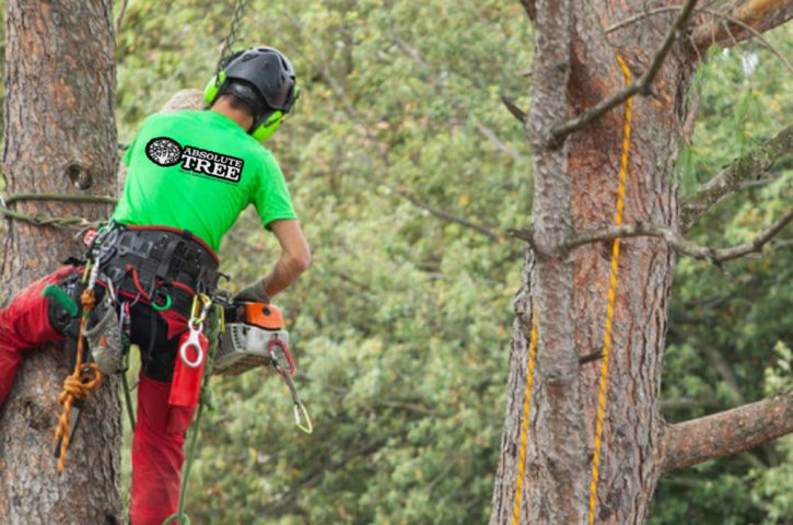Check If Your Tree Service Provider Has These Equipment