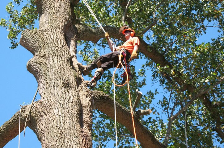 A Simple Trick to Getting Good Tree Service