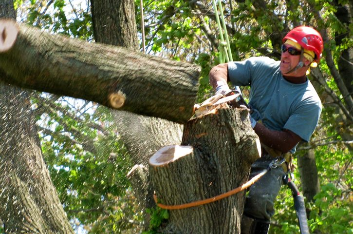 Top Qualities of a Good Tree Service Company