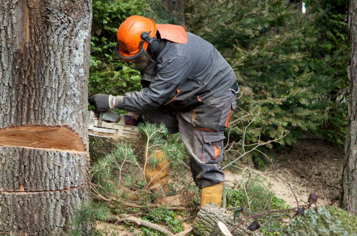 Why Hiring a Professional Tree Removal Service is a Good Thing